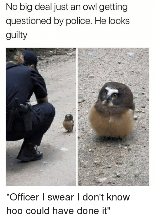 """Memes, 🤖, and Owl: No big deal just an owl getting  questioned by police. He looks  guilty """"Officer I swear I don't know hoo could have done it"""""""