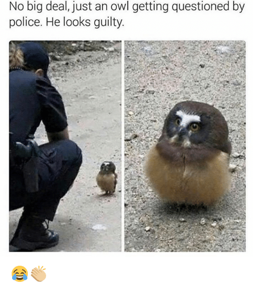 Alter Ego de la Garde ! - Page 13 No-big-deal-just-an-owl-getting-questioned-by-police-6109785