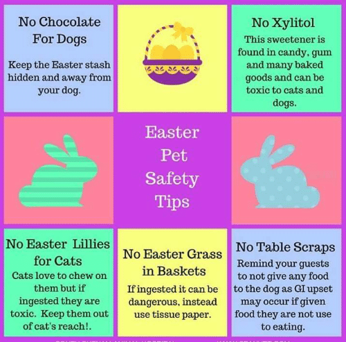 Baked, Candy, and Cats: No Chocolate  For Dogs  No Xylitol  This sweetener is  found in candy, gum  and many baked  goods and can be  toxic to cats and  dogs.  Keep the Easter stash  hidden and away from  your dog.  Easter  Pet  Safety  Tips  No Easter Lillies  for Cats  Cats love to chew on  them but if  ingested they are  No Table Scraps  Remind your guests  to not give any food  No Easter Grass  in Baskets  If ingested it can be to the dog as GI upset  dangerous, instead occur if given  toxic. Keep them out use tissue paper food they are not use  of cat's reach!.  to eating.