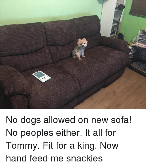 No Dogs Allowed On New Sofa No Peoples Either It All For Tommy Fit