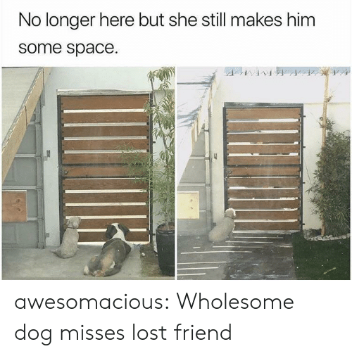 Tumblr, Lost, and Blog: No longer here but she still makes him  some space. awesomacious:  Wholesome dog misses lost friend
