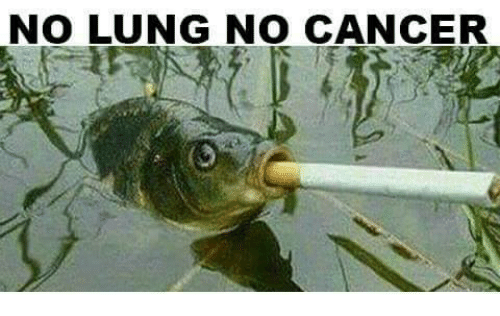 Memes, 🤖, and Lung: NO LUNG NO CANCER