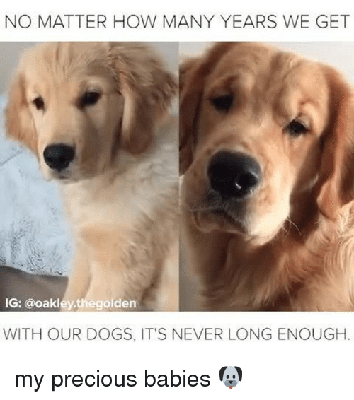 Dogs, Precious, and Relatable: NO MATTER HOW MANY YEARS WE GET  IG: @oakleythegolden  WITH OUR DOGS, IT'S NEVER LONG ENOUGH. my precious babies 🐶