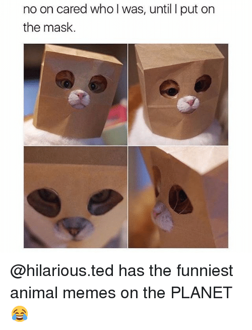 Memes, Ted, and The Mask: no on cared who l was, until I put on  the mask. @hilarious.ted has the funniest animal memes on the PLANET 😂