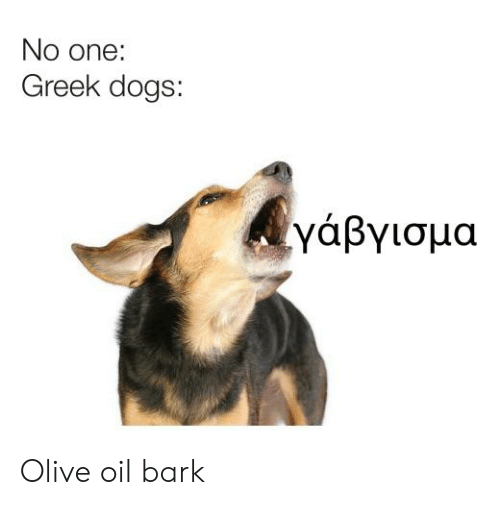 No One Greek Dogs γάβγισμα Olive Oil Bark | Dogs Meme on ME ME
