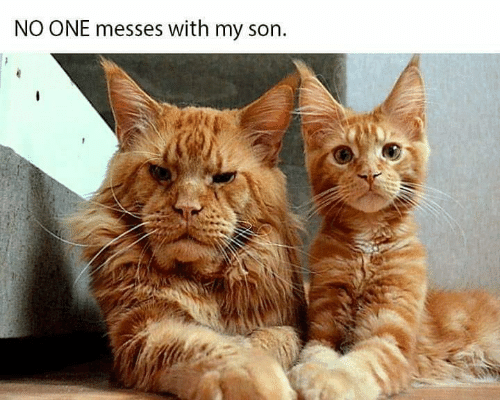 Memes, 🤖, and One: NO ONE messes with my son.
