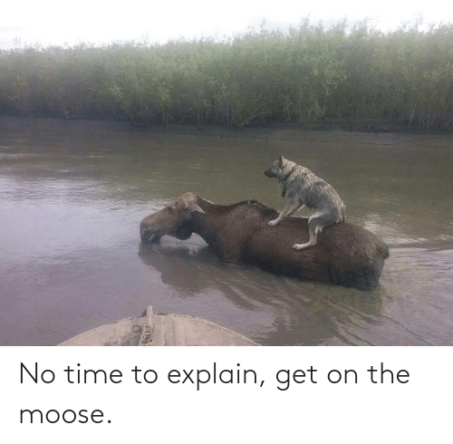 Time, Moose, and Get: No time to explain, get on the moose.