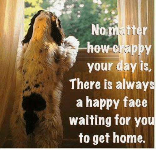 Memes, Happy, and Home: No  tter  how crappy  your day is,  There is always  a happy face  waiting for you  to get home.