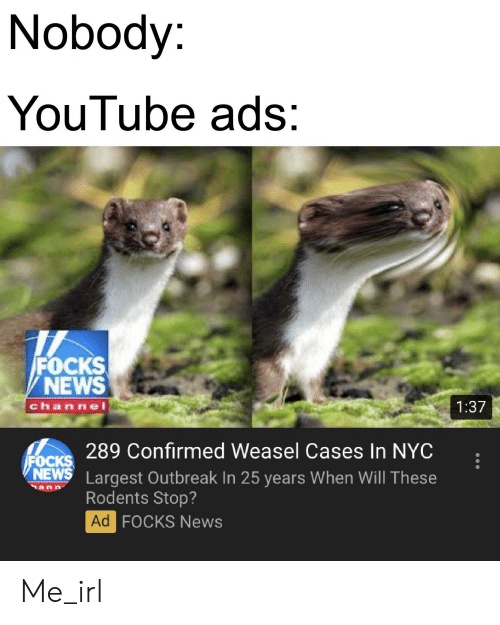 News, youtube.com, and Irl: Nobody:  YouTube ads:  FOCKS  NEWS  chan nel  1:37  289 Confirmed Weasel Cases In NYC  FOCKS  NEWS Largest Outbreak In 25 years When Will These  Rodents Stop?  Ad  FOCKS News Me_irl