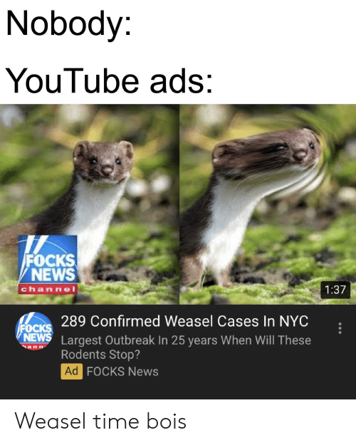 News, youtube.com, and Time: Nobody:  YouTube ads:  FOCKS  NEWS  chan nel  1:37  289 Confirmed Weasel Cases In NYC  FOCKS  NEWS Largest Outbreak In 25 years When Will These  Rodents Stop?  Ad  FOCKS News Weasel time bois