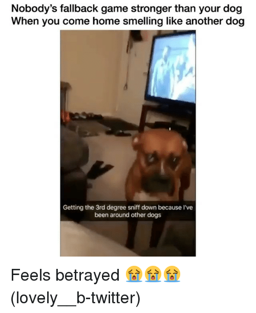 Dogs, Memes, and Twitter: Nobody's fallback game stronger than your dog  When you come home smelling like another dog  Getting the 3rd degree sniff down because I've  been around other dogs Feels betrayed 😭😭😭 (lovely__b-twitter)