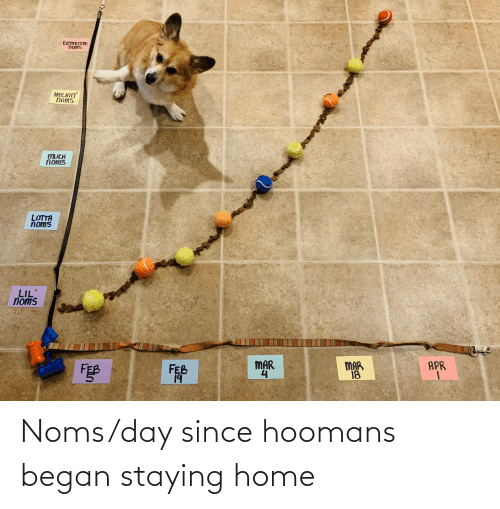Home, Day, and Noms: Noms/day since hoomans began staying home