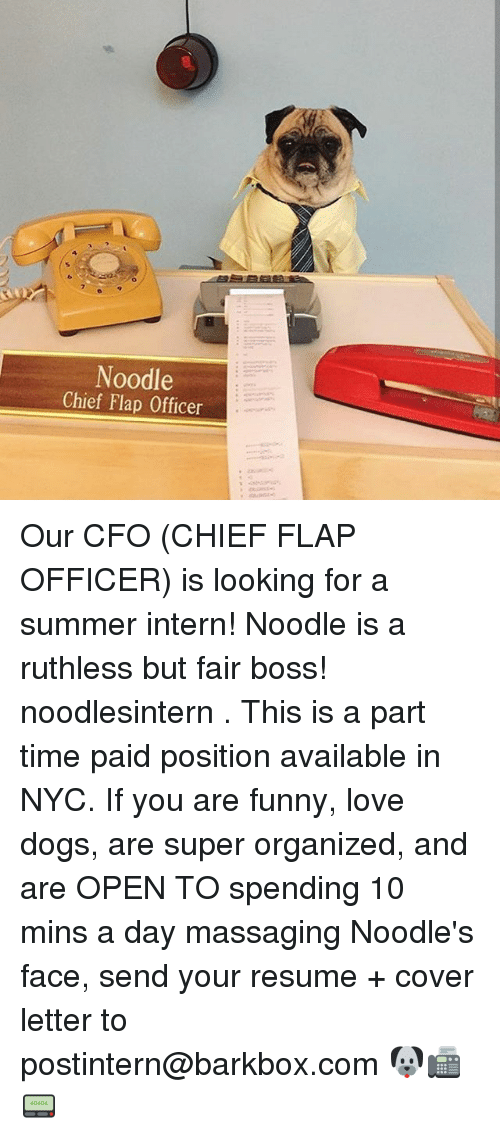 Dogs, Funny, And Love: Noodle Chief Flap Officer Our CFO (CHIEF FLAP  Cfo Cover Letter