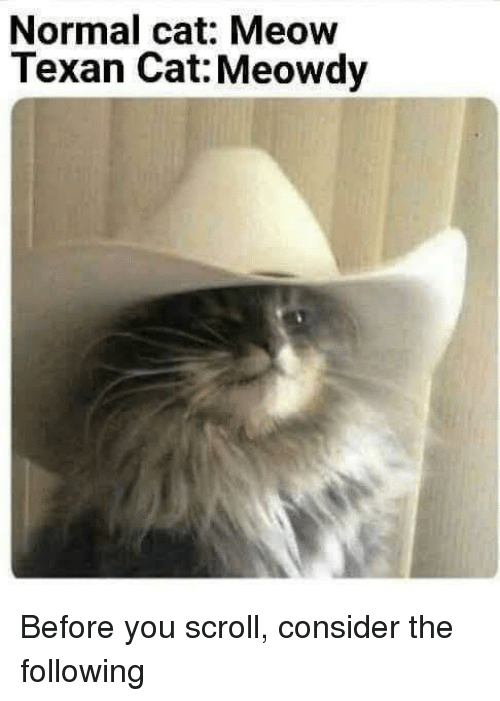 The Following, Texan, and Cat: Normal cat: Meow  Texan Cat: Meowdy Before you scroll, consider the following