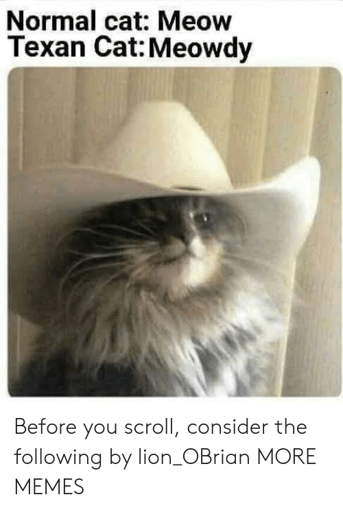 Dank, Memes, and Target: Normal cat: Meow  Texan Cat: Meowdy Before you scroll, consider the following by lion_OBrian MORE MEMES