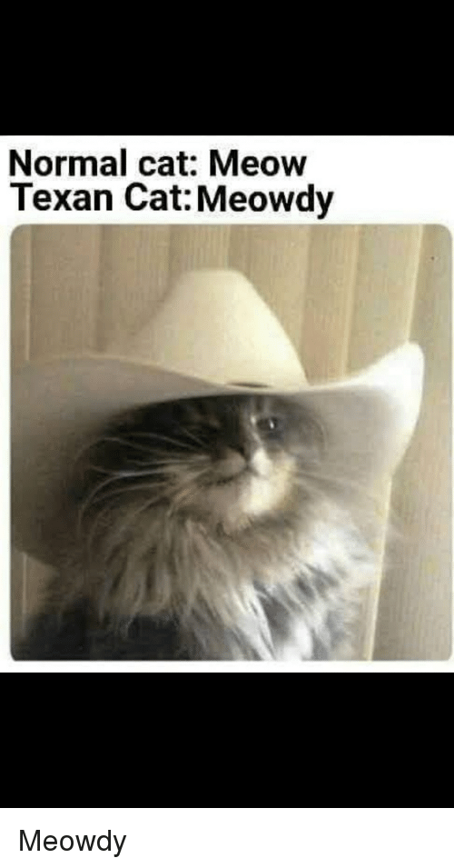 normal-cat-meow-texan-cat-meowdy-meowdy-