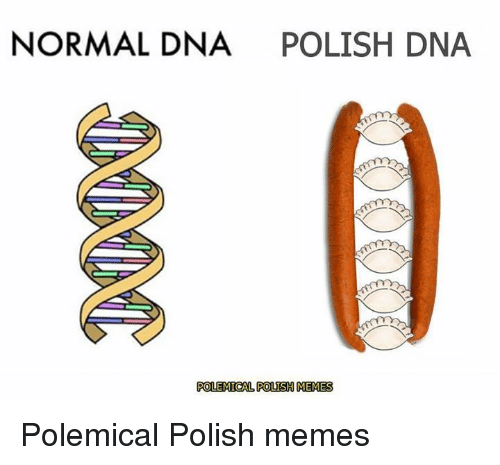 How To Polish A Car >> NORMAL DNA POLISH DNA POLEMICAL POLISH MEMES Polemical Polish Memes | Meme on ME.ME
