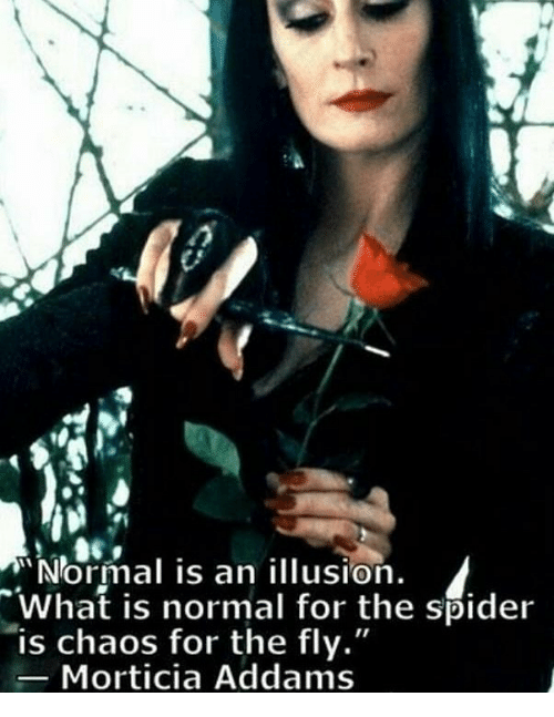 Normal is an illusion what is normal for the spider is chaos for the memes spider and what is normal is an illusion what is normal altavistaventures Choice Image