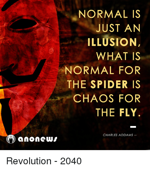 Normal is just an illusion what is normal for the spider is chaos memes spider and revolution normal is just an illusion what is normal altavistaventures Choice Image
