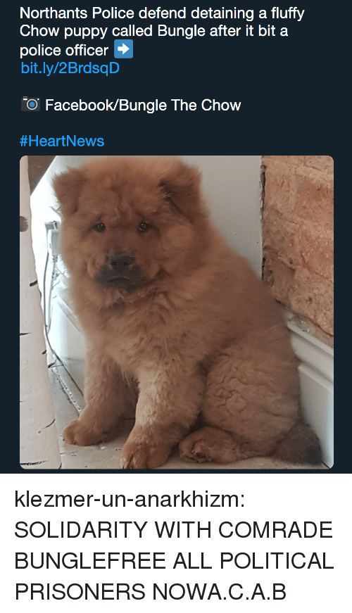Facebook, Police, and Tumblr: Northants Police defend detaining a fluffy  Chow puppy called Bungle after it bit a  police officer  bit.ly/2BrdsqD  O Facebook/Bungle The Chow  klezmer-un-anarkhizm:  SOLIDARITY WITH COMRADE BUNGLEFREE ALL POLITICAL PRISONERS NOWA.C.A.B