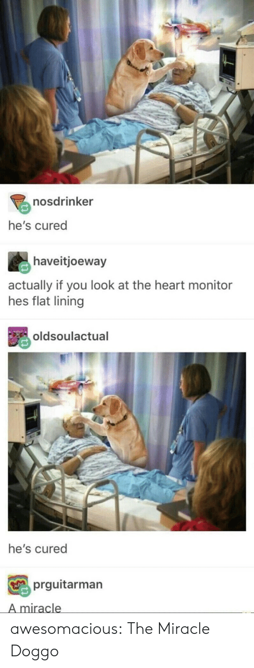 Tumblr, Blog, and Heart: nosdrinker  he's cured  haveitjoeway  actually if you look at the heart monitor  hes flat lining  oldsoulactual  he's cured  prguitarman  A miracle awesomacious:  The Miracle Doggo