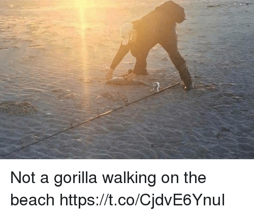 Beach, Faces-In-Things, and Gorilla: Not a gorilla walking on the beach https://t.co/CjdvE6YnuI