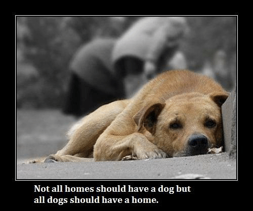 Dogs, Memes, and Home: Not all homes should have a dog but  all dogs should have a home.