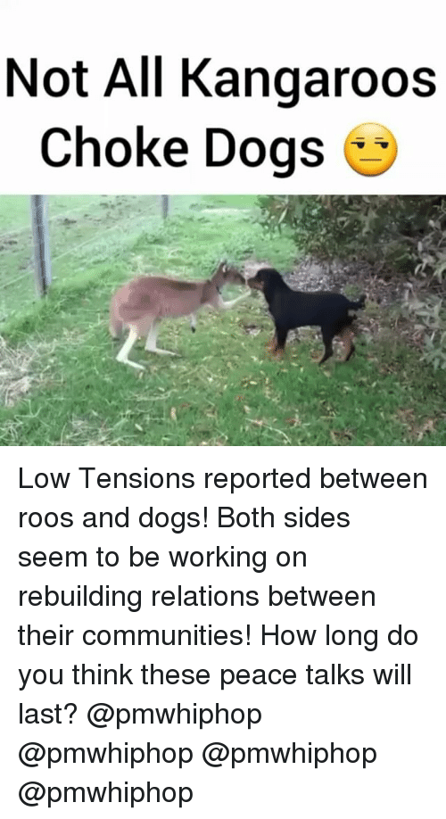 Community, Dogs, and Memes: Not All Kangaroos  choke Dogs Low Tensions reported between roos and dogs! Both sides seem to be working on rebuilding relations between their communities! How long do you think these peace talks will last? @pmwhiphop @pmwhiphop @pmwhiphop @pmwhiphop