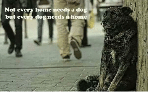 Memes, Home, and 🤖: Not every home needs a dog  but every dog needs a home