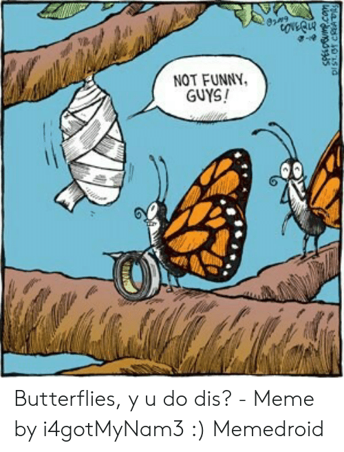 luthfiannisahay: Butterfly Meme Is This Loss
