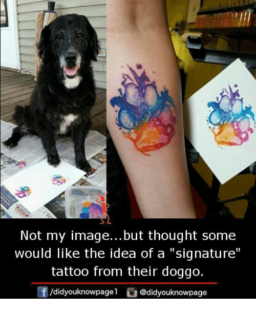 """Memes, Image, and Tattoo: Not my image... but thought some  would like the idea of a signature""""  tattoo from their doggo.  /didyouknowpagel@didyouknowpage"""