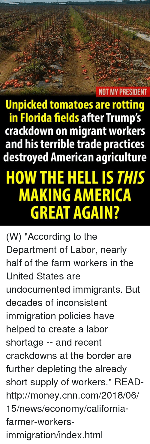 """America, cnn.com, and Money: NOT MY PRESIDENT  Unpicked tomatoes are rotting  in Florida fields after Trump's  crackdown on migrant workers  and his terrible trade practices  destroyed American agriculture  HOW THE HELL IS THIS  MAKING AMERICA  GREAT AGAIN? (W) """"According to the Department of Labor, nearly half of the farm workers in the United States are undocumented immigrants. But decades of inconsistent immigration policies have helped to create a labor shortage -- and recent crackdowns at the border are further depleting the already short supply of workers.""""  READ-  http://money.cnn.com/2018/06/15/news/economy/california-farmer-workers-immigration/index.html"""