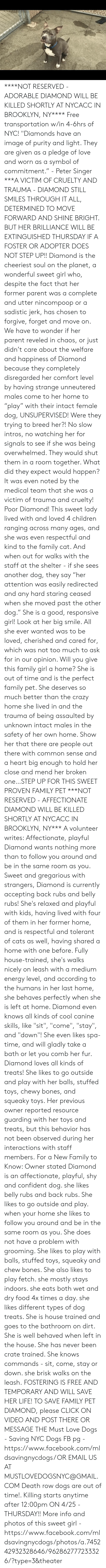 """Bones, Cats, and Children: ****NOT RESERVED - ADORABLE DIAMOND WILL BE KILLED SHORTLY AT NYCACC IN BROOKLYN, NY**** Free transportation w/in 4-6hrs of NYC!  """"Diamonds have an image of purity and light. They are given as a pledge of love and worn as a symbol of commitment."""" -  Peter Singer ***A VICTIM OF CRUELTY AND TRAUMA - DIAMOND STILL SMILES THROUGH IT ALL, DETERMINED TO MOVE FORWARD AND SHINE BRIGHT. BUT HER BRILLIANCE WILL BE EXTINGUISHED THURSDAY IF A FOSTER OR ADOPTER DOES NOT STEP UP!!  Diamond is the cheeriest soul on the planet, a wonderful sweet girl who, despite the fact that her former parent was a complete and utter nincompoop or a sadistic jerk, has chosen to forgive, forget and move on. We have to wonder if her parent reveled in chaos, or just didn't care about the welfare and happiness of Diamond because they completely disregarded her comfort level by having strange unneutered males come to her home to """"play"""" with their intact female dog, UNSUPERVISED!  Were they trying to breed her?! No slow intros, no watching her for signals to see if she was being overwhelmed. They would shut them in a room together. What did they expect would happen? It was even noted by the medical team that she was a victim of trauma and cruelty! Poor Diamond! This sweet lady lived with and loved 4 children ranging across many ages, and she was even respectful and kind to the family cat. And when out for walks with the staff at the shelter - if she sees another dog, they say """"her attention was easily redirected and any hard staring ceased when she moved past the other dog.""""  She is a good, responsive girl! Look at her big smile. All she ever wanted was to be loved, cherished and cared for, which was not too much to ask for in our opinion. Will you give this family girl a home? She is out of time and is the perfect family pet. She deserves so much better than the crazy home she lived in and the trauma of being assaulted by unknown intact males in the safety of her own home.  """