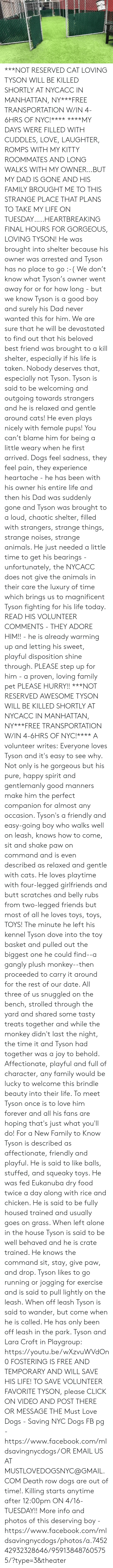 Being Alone, Animals, and Best Friend: ***NOT RESERVED CAT LOVING TYSON WILL BE KILLED SHORTLY AT NYCACC IN MANHATTAN, NY***FREE TRANSPORTATION W/IN 4-6HRS OF NYC!****  ****MY DAYS WERE FILLED WITH CUDDLES, LOVE, LAUGHTER, ROMPS WITH MY KITTY ROOMMATES AND LONG WALKS WITH MY OWNER…BUT MY DAD IS GONE AND HIS FAMILY BROUGHT ME TO THIS STRANGE PLACE THAT PLANS TO TAKE MY LIFE ON TUESDAY…..HEARTBREAKING FINAL HOURS FOR GORGEOUS, LOVING TYSON! He was brought into shelter because his owner was arrested and Tyson has no place to go :-(  We don't know what Tyson's owner went away for or for how long - but we know Tyson is a good boy and surely his Dad never wanted this for him.  We are sure that he will be devastated to find out that his beloved best friend was brought to a kill shelter, especially if his life is taken.  Nobody deserves that, especially not Tyson. Tyson is said to be welcoming and outgoing towards strangers and he is relaxed and gentle around cats! He even plays nicely with female pups!  You can't blame him for being a little weary when he first arrived.  Dogs feel sadness, they feel pain, they experience heartache - he has been with his owner his entire life and then his Dad was suddenly gone and Tyson was brought to a loud, chaotic shelter, filled with strangers, strange things, strange noises, strange animals.  He just needed a little time to get his bearings - unfortunately, the NYCACC does not give the animals in their care the luxury of time which brings us to magnificent Tyson fighting for his life today. READ HIS VOLUNTEER COMMENTS - THEY ADORE HIM!! - he is already warming up and letting his sweet, playful disposition shine through.  PLEASE step up for him - a proven, loving family pet PLEASE HURRY!! ***NOT RESERVED AWESOME TYSON WILL BE KILLED SHORTLY AT NYCACC IN MANHATTAN, NY***FREE TRANSPORTATION W/IN 4-6HRS OF NYC!****  A volunteer writes: Everyone loves Tyson and it's easy to see why. Not only is he gorgeous but his pure, happy spirit and gen