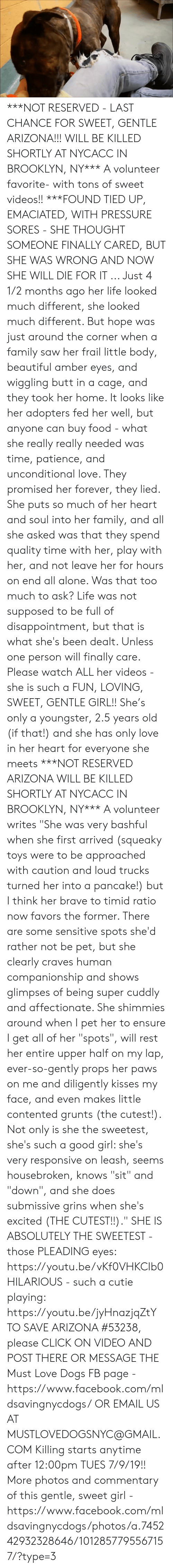 """Being Alone, Beautiful, and Butt: ***NOT RESERVED - LAST CHANCE FOR SWEET, GENTLE ARIZONA!!! WILL BE KILLED SHORTLY AT NYCACC IN BROOKLYN, NY*** A volunteer favorite- with tons of sweet videos!!   ***FOUND TIED UP, EMACIATED, WITH PRESSURE SORES - SHE THOUGHT SOMEONE FINALLY CARED, BUT SHE WAS WRONG AND NOW SHE WILL DIE FOR IT ... Just 4 1/2 months ago her life looked much different, she looked much different. But hope was just around the corner when a family saw her frail little body, beautiful amber eyes, and wiggling butt in a cage, and they took her home. It looks like her adopters fed her well, but anyone can buy food - what she really really needed was time, patience, and unconditional love. They promised her forever, they lied. She puts so much of her heart and soul into her family, and all she asked was that they spend quality time with her, play with her, and not leave her for hours on end all alone. Was that too much to ask? Life was not supposed to be full of disappointment, but that is what she's been dealt. Unless one person will finally care. Please watch ALL her videos - she is such a FUN, LOVING, SWEET, GENTLE GIRL!! She's only a youngster, 2.5 years old (if that!) and she has only love in her heart for everyone she meets ***NOT RESERVED ARIZONA WILL BE KILLED SHORTLY AT NYCACC IN BROOKLYN, NY***  A volunteer writes """"She was very bashful when she first arrived (squeaky toys were to be approached with caution and loud trucks turned her into a pancake!) but I think her brave to timid ratio now favors the former. There are some sensitive spots she'd rather not be pet, but she clearly craves human companionship and shows glimpses of being super cuddly and affectionate. She shimmies around when I pet her to ensure I get all of her """"spots"""", will rest her entire upper half on my lap, ever-so-gently props her paws on me and diligently kisses my face, and even makes little contented grunts (the cutest!). Not only is she the sweetest, she's such a good girl: s"""