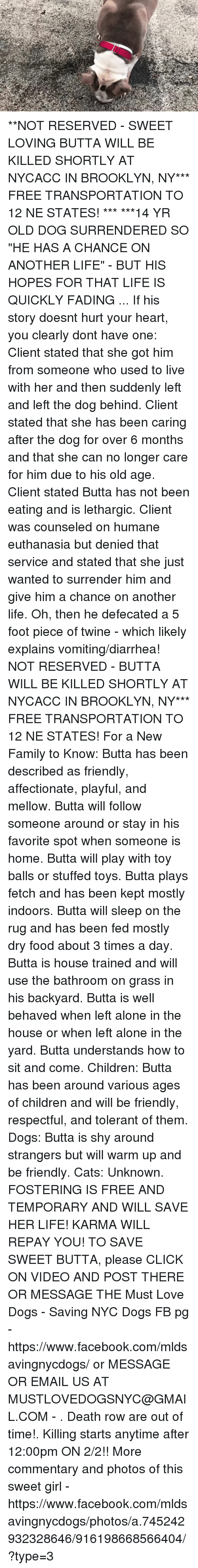 """Being Alone, Cats, and Children: **NOT RESERVED - SWEET LOVING BUTTA WILL BE KILLED SHORTLY AT NYCACC IN BROOKLYN, NY*** FREE TRANSPORTATION TO 12 NE STATES! ***  ***14 YR OLD DOG SURRENDERED SO """"HE HAS A CHANCE ON ANOTHER LIFE"""" - BUT HIS HOPES FOR THAT LIFE IS QUICKLY FADING ... If his story doesnt hurt your heart, you clearly dont have one: Client stated that she got him from someone who used to live with her and then suddenly left and left the dog behind. Client stated that she has been caring after the dog for over 6 months and that she can no longer care for him due to his old age. Client stated Butta has not been eating and is lethargic. Client was counseled on humane euthanasia but denied that service and stated that she just wanted to surrender him and give him a chance on another life. Oh, then he defecated a 5 foot piece of twine - which likely explains vomiting/diarrhea! NOT RESERVED - BUTTA WILL BE KILLED SHORTLY AT NYCACC IN BROOKLYN, NY*** FREE TRANSPORTATION TO 12 NE STATES!   For a New Family to Know: Butta has been described as friendly, affectionate, playful, and mellow. Butta will follow someone around or stay in his favorite spot when someone is home. Butta will play with toy balls or stuffed toys. Butta plays fetch and has been kept mostly indoors. Butta will sleep on the rug and has been fed mostly dry food about 3 times a day. Butta is house trained and will use the bathroom on grass in his backyard. Butta is well behaved when left alone in the house or when left alone in the yard. Butta understands how to sit and come.   Children: Butta has been around various ages of children and will be friendly, respectful, and tolerant of them.  Dogs: Butta is shy around strangers but will warm up and be friendly.  Cats: Unknown.  FOSTERING IS FREE AND TEMPORARY AND WILL SAVE HER LIFE! KARMA WILL REPAY YOU!  TO SAVE SWEET BUTTA, please CLICK ON VIDEO AND POST THERE OR MESSAGE THE Must Love Dogs - Saving NYC Dogs FB pg -https://www.facebook.com/mldsavingny"""