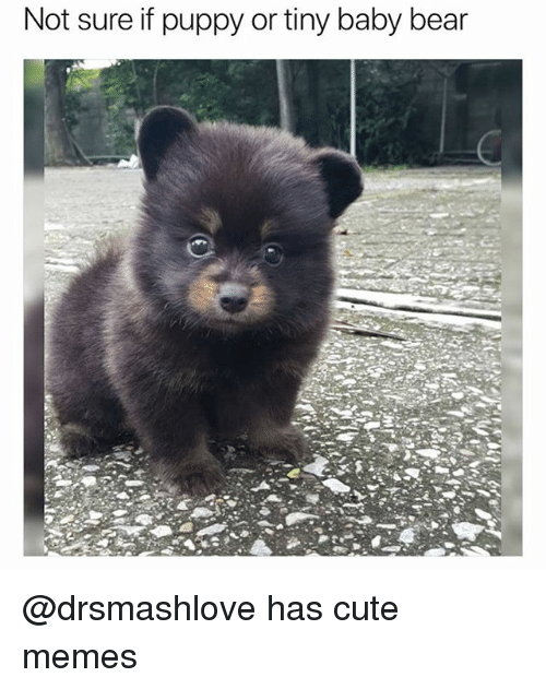 not sure if puppy or tiny baby bear has cute memes cute meme on me me