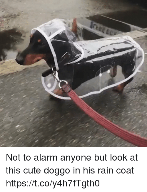 Cute, Alarm, and Rain: Not to alarm anyone but look at this  cute doggo in his rain coat https://t.co/y4h7fTgth0