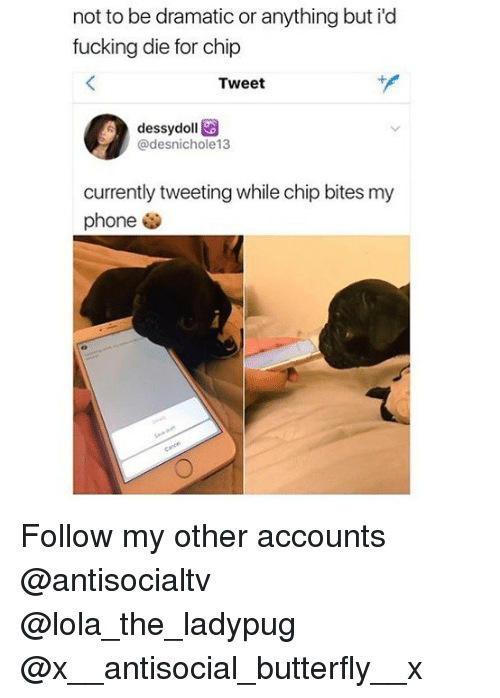 Fucking, Memes, and Phone: not to be dramatic or anything but i'd  fucking die for chip  Tweet  dessydoll  @desnichole13  currently tweeting while chip bites my  phone . Follow my other accounts @antisocialtv @lola_the_ladypug @x__antisocial_butterfly__x