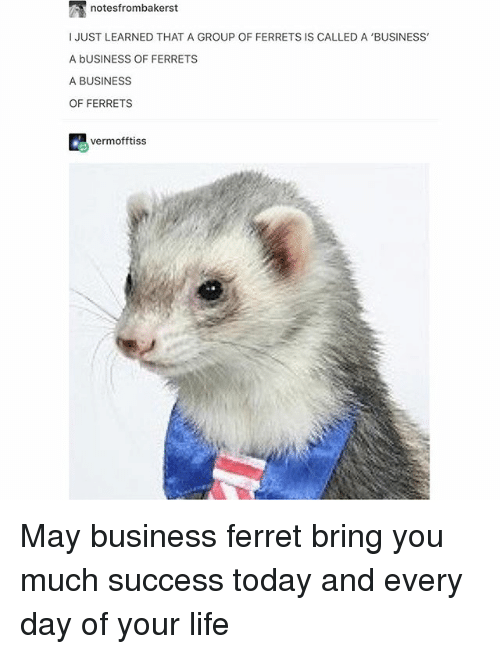Business Of Ferrets