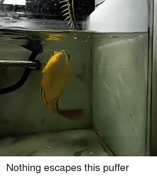 This, Nothing, and Puffer: Nothing escapes this puffer