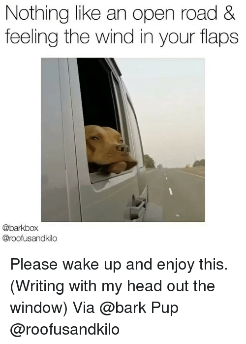 Head, Memes, and Pup: Nothing like an open road &  feeling the wind in your flaps  @barkbox  @roofusandkilo Please wake up and enjoy this. (Writing with my head out the window) Via @bark Pup @roofusandkilo