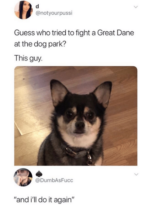 """Dank, Do It Again, and Guess: @notyourpussi  Guess who tried to fight a Great Dane  at the dog park?  This guy.  @DumbAsFucc  """"and i'll do it again"""""""