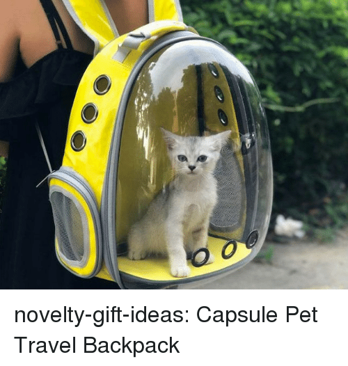 Tumblr, Blog, and Travel: novelty-gift-ideas:   Capsule Pet Travel Backpack
