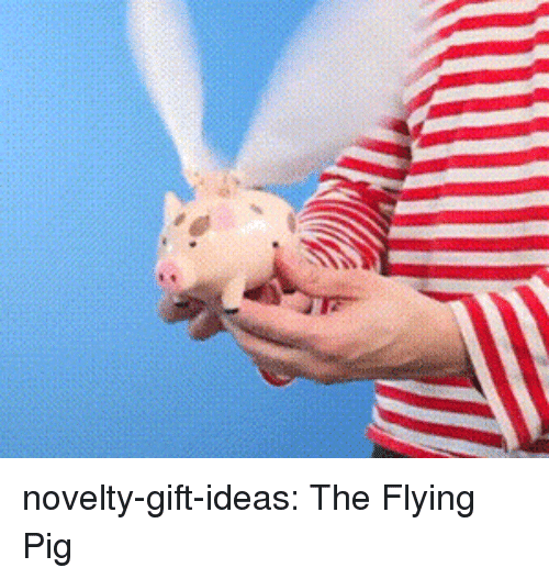 Tumblr, Blog, and Com: novelty-gift-ideas:  The Flying Pig