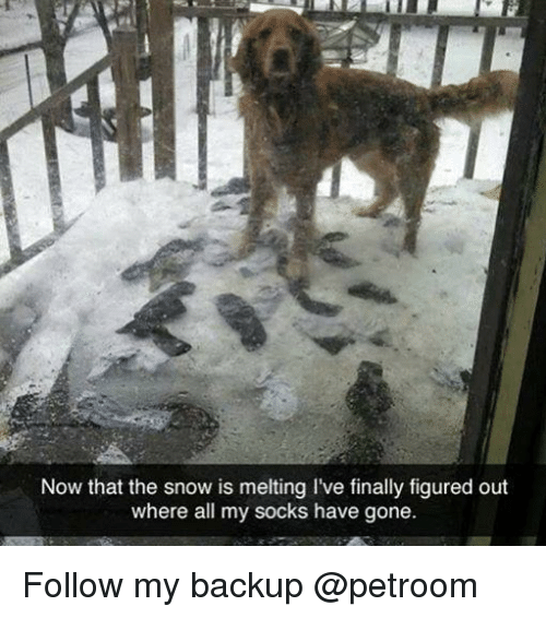 Funny, Snow, and Gone: Now that the snow is melting l've finally figured out  where all my socks have gone. Follow my backup @petroom
