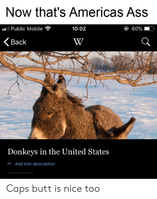 Now That's Americas Ass 1002 Il Public Mobile Back Donkeys ...