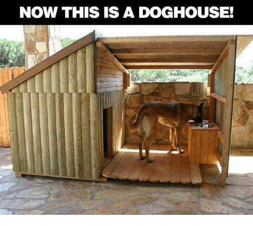now this is a doghouse 21187996 ✅ 25 best memes about doghouse doghouse memes,Doghouse Meme