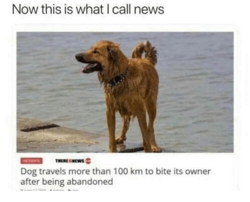 Anaconda, News, and Dog: Now this is what I call news  THERENEWS  Dog travels more than 100 km to bite its owner  after being abandoned