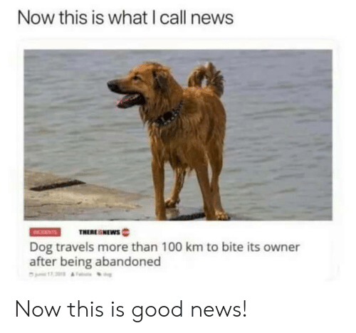 Anaconda, News, and Good: Now this is what I call news  THERESNEWs  Dog travels more than 100 km to bite its owner  after being abandoned Now this is good news!